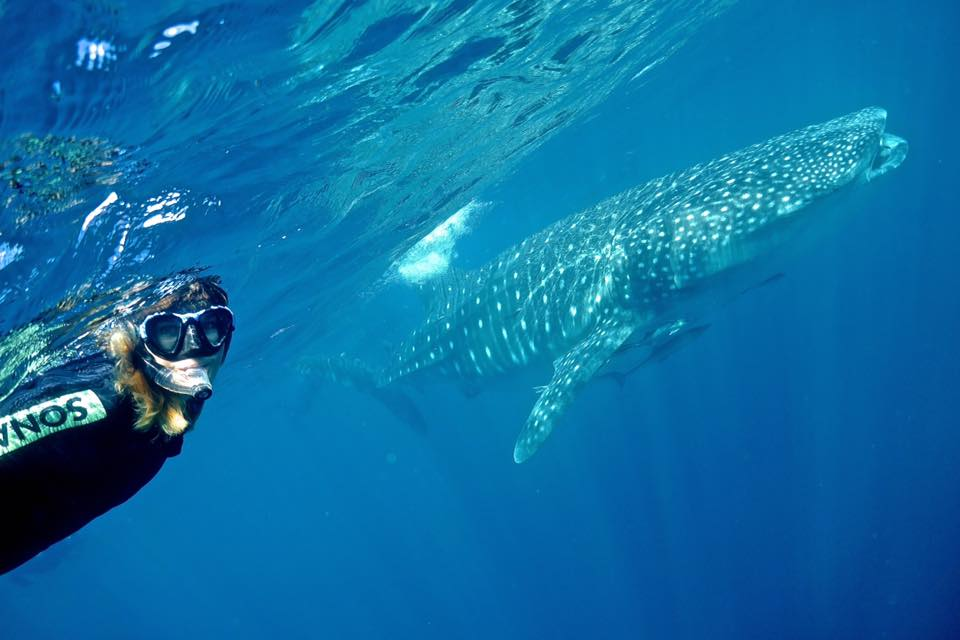 m with whaleshark